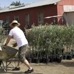 D'Oliva Planting Day